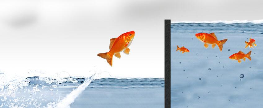 Avansa Blog Goldfisch